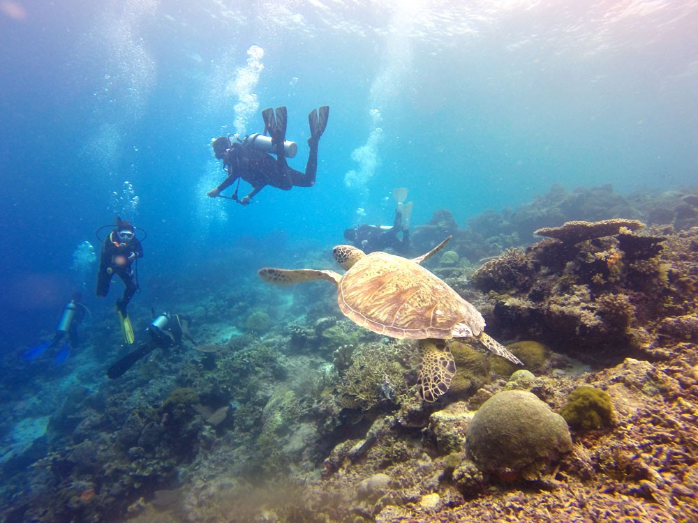 Great Barrier Reef to catch it before it's gone