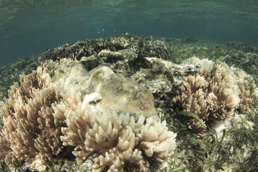 Jedna trzecia koralowców w północnej i centralnej części Wielkiej Rafy Koralowej jest martwa (Shutterstock.com)